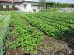 H271018野島農園 (8)