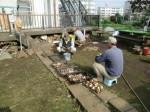 H271020サトイモ収穫 (3)