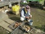 H271020サトイモ収穫 (8)