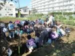 H271025サツマイモ掘り及び炊き出し訓練 (34)