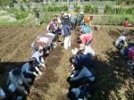 H271025サツマイモ掘り及び炊き出し訓練 (44)