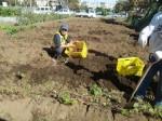 H271025サツマイモ掘り及び炊き出し訓練 (111)