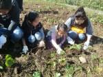 H271025サツマイモ掘り及び炊き出し訓練 (24)
