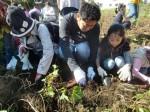 H271025サツマイモ掘り及び炊き出し訓練 (25)