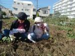H271025サツマイモ掘り及び炊き出し訓練 (30)