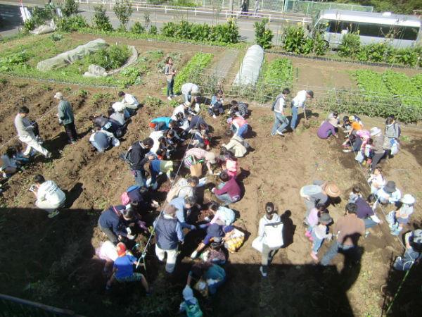 H271025サツマイモ掘り及び炊き出し訓練 (86)