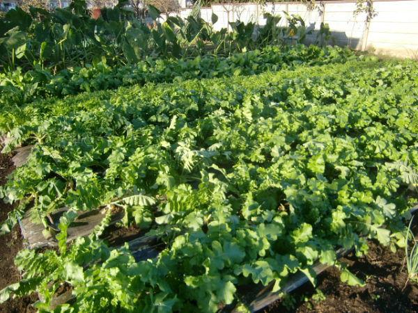 H271103農園作業 (5)