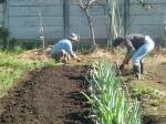 H271103農園作業 (8)