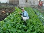 H271103農園作業 (2)