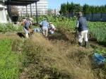 H271104農園作業(ラッカセイ) (2)