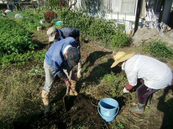 H271104農園作業(ラッカセイ) (5)