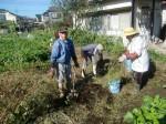 H271104農園作業(ラッカセイ) (6)