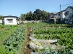 H271106農園作業 (6)