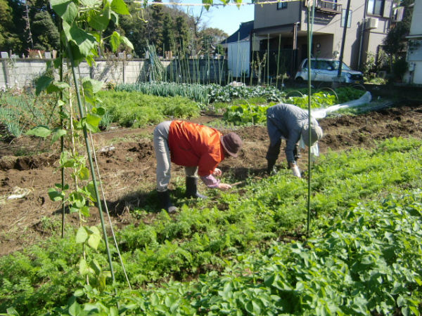 H271106農園作業 (1)