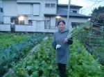 H271108農園作業ダイコン収穫 (17)