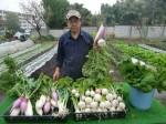 H271108農園作業ダイコン収穫 (3)
