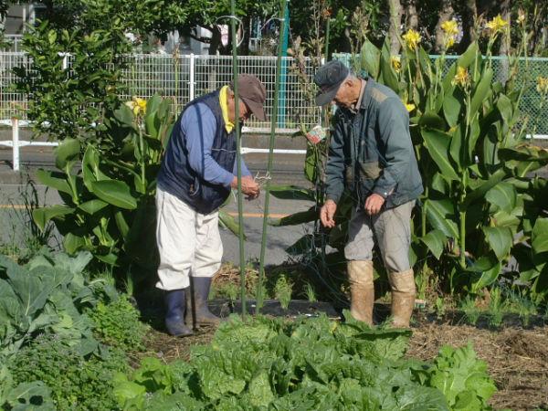 H271111農園作業 (2)