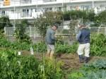 H271111農園作業 (4)