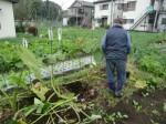 H271111農園作業 (6)