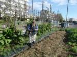 H271111農園作業 (1)