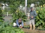 H271111農園作業 (3)