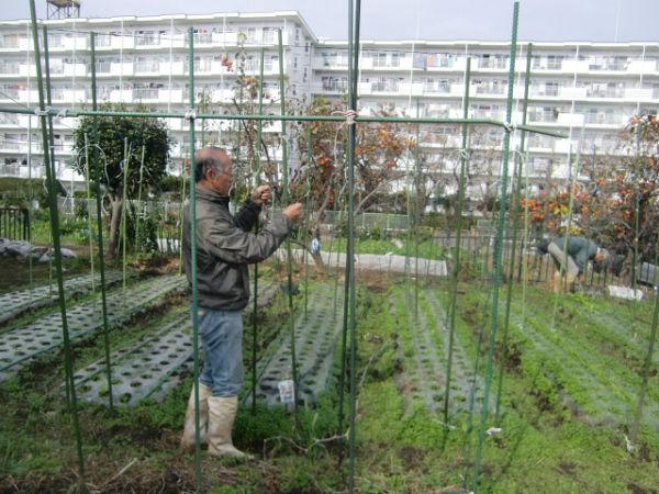H271113農園作業  (1)