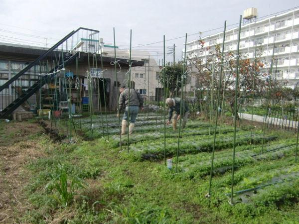 H271113農園作業  (2)