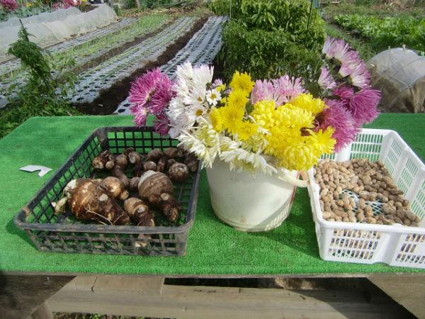 H271113農園作業  (3)