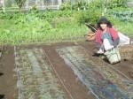 H271115農園野菜・おもてなしのお花 (1)