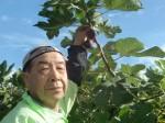 H271115農園野菜・おもてなしのお花 (13)