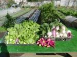 H271115農園野菜・おもてなしのお花 (3)