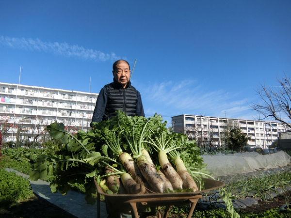 H271128農園作業(大根) (1)