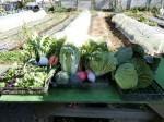 H271218野島農園収穫 (6)