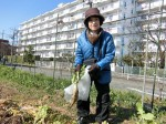 H270115農園収穫(二十日大根) (5)
