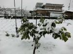 H280118野島農園に雪 (11)