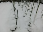 H280118野島農園に雪 (14)