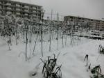 H280118野島農園に雪 (3)