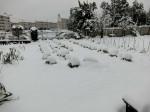 H280118野島農園に雪 (4)