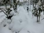 H280118野島農園に雪 (9)