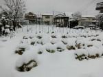 H280118野島農園に雪 (13)
