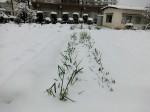 H280118野島農園に雪 (16)