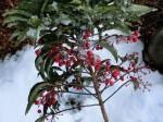 H280118野島農園に雪 (18)