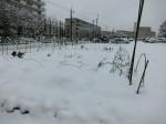 H280118野島農園に雪 (8)
