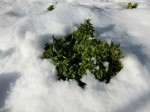 H280120野島農園に雪 (15)