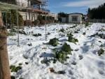 H280120野島農園に雪 (2)
