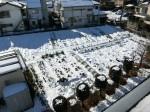 H280120野島農園に雪 (22)