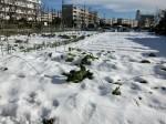 H280120野島農園に雪 (3)