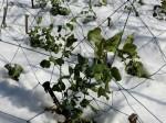 H280120野島農園に雪 (30)