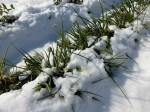 H280120野島農園に雪 (5)