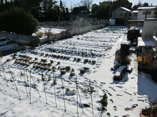 H280120野島農園に雪 (29)